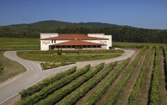 Les caves Terras Gauda pionnières en matière de viticulture de prècision avec le projet européen R&D&I leader en espagne
